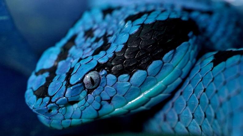 rüyada yılan