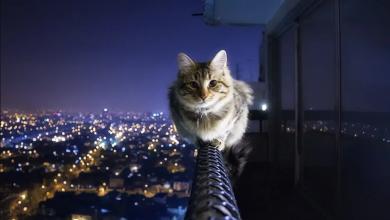 kedi cinsleri