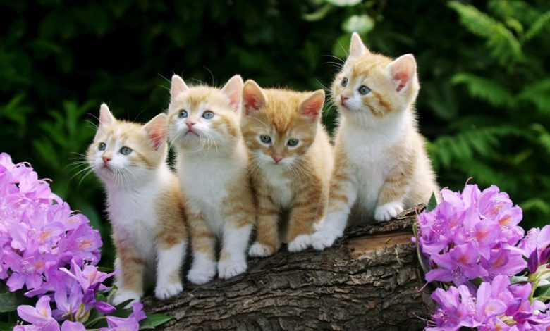 rüyada kediler görmek